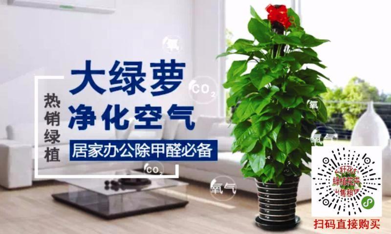 哈尔滨开发区年宵花卉批发全城配送 及时送达