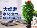 哈尔滨花卉绿植批发免费配送