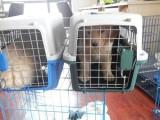 舒兰宠物托运到全国 随机宠物托运服务