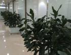 天津汉沽绿植租赁花卉租赁公司海明花卉专业鲜花租摆销售