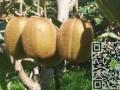 徐香猕猴桃价格,眉县绿心猕猴桃价格,5斤,10斤一箱,