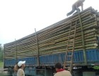 北京定做竹篱笆哪里卖批发竹竿