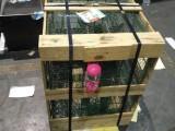 廣州經濟開發區寵物托運快遞