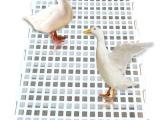 漏粪板 漏屎板 现代化养殖塑料漏粪地板 原料生产漏粪板