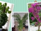 写字楼、办公室、酒店专业绿植租摆、园林绿化