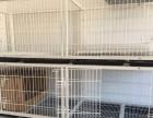 2米大型宠物笼子猫笼子猫用品