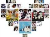 北京养殖场直销 出售世界名犬丨宠物狗狗丨全国免费送货