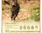 优爵美国纯天然猫粮,零售12元/斤