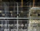 舟山鸽笼四层产蛋鸽笼三层十二位肉鸽笼热镀锌广式鸽笼
