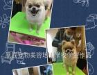 凰霆宠物美容培训学校4月招生