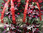 绍兴县开张花篮鲜花礼盒周年会议鲜花速递