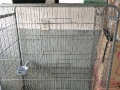 出1.6宽三层大猫笼子