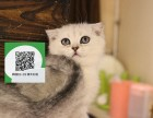 深圳哪里卖折耳猫 折耳猫价格 折耳猫哪里有卖