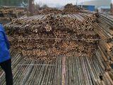 唐山竹竿 杉木桿 高壓電線防護杉木桿