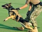 广州猋犬宠物训练基地