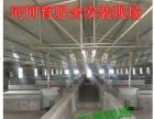 猪场新设备自动供料料线世昌畜牧免费设计安装