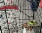 三层猫笼别墅铁艺