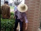 深圳专业灭鼠捕蛇杀蟑螂灭白蚁杀臭虫捅马蜂窝公司 捷控