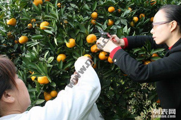上海近郊农家乐哪里好玩 春节 南汇乡趣农家乐 钓鱼烧烤采摘