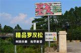 日本罗汉松价格园林景观树风水树