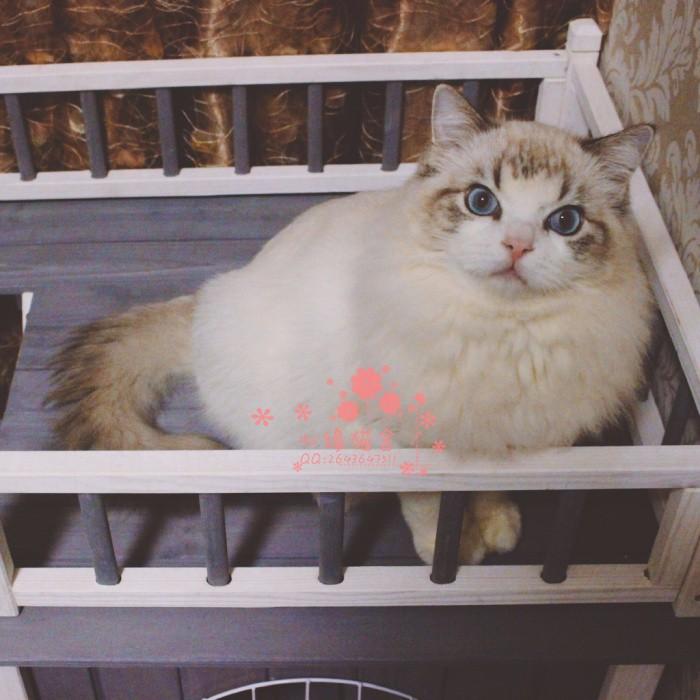 无锡哪里卖布偶猫较便宜多少钱一只 购买包健康多久