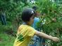 浮宫采摘杨梅、普照寺、南太武山地生态园一日互动