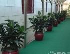 绿植租摆、临时租摆、绿化工程、庆典布置、价格优惠