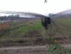 宽城周边 兰家镇 土地 3200平米葡萄园不用钱