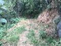 河南省南阳市西峡县80亩山地对外转让