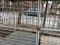 出售大狗笼子,直径能有1.5米,转给有用的朋友。
