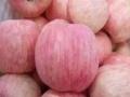 山东哪里有脆甜的红富士苹果日照红富士苹果供应