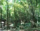 青城山青城新村环境空气位置无可挑剔的地方