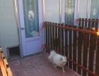 丰益桥宠物寄养猫狗 长期代养老年宠物 独立寄养散养 可接送