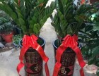 黄山绿植租摆零售/上门养护植物