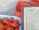 汉陵草莓采摘园欢迎你