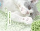 高端无谷纯肉天然鲜猫粮 罐头 猫砂
