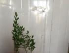 老谷花卉批发,园林绿化