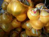溪特产柚子 大量供应