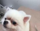 喵汪宠物生活馆 小型犬美容一次