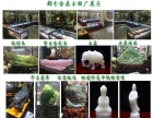 玉器批发 金鼎玉雕厂