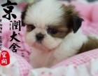 温州哪里有卖西施犬的