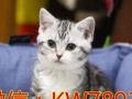 3.8女神节 全场猫咪153折起 纯家养 全国飞