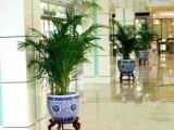苏州办公室植物租赁花卉租赁