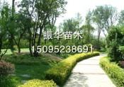 青岛道路绿化工程潍坊声誉好的小区绿化