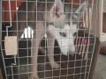 潍坊宠乐游 宠物托运一条龙服务 价格合理 安全到家