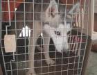 青岛宠乐游到韩国空运宠物 宠物随机 宠物托运