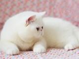 上海青浦包子脸加菲猫哪里卖