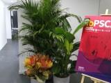 西城办公室绿植租赁,花卉租赁
