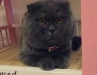 萌太宠物 组建小型猫舍 加盟猫舍