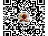出售高贵纯血统萨摩耶幼犬包养活北京可以上门挑选